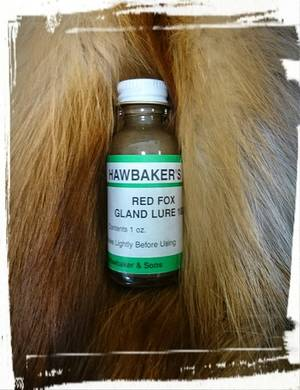 Hawbaker Red Fox